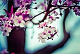 flowers-692510-400x270-MM-100.jpg